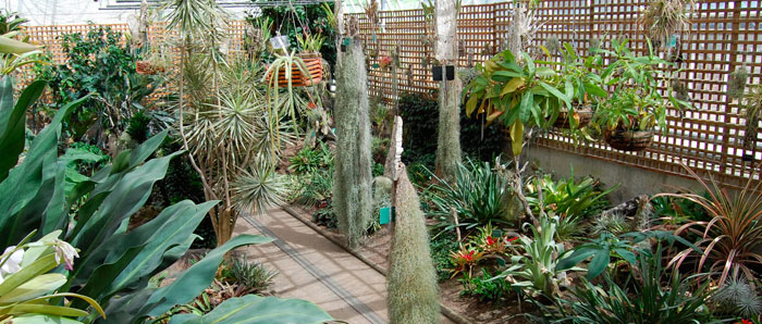 jardin-botanico-juan-carlos-i