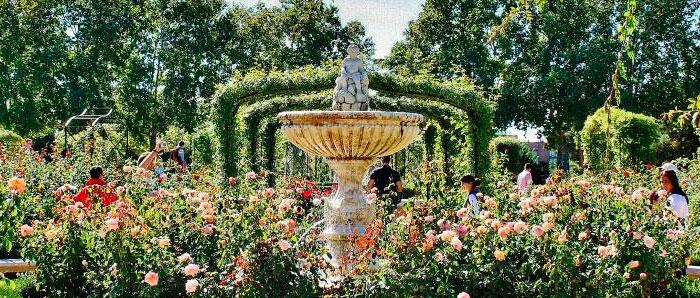 rosaleda-parque-del-oeste